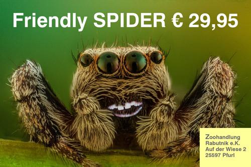 Spinne-freundlich